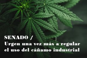 SENADO / Urgen una vez más a regular el uso del cáñamo industrial
