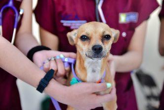 Inicia esterilización canina